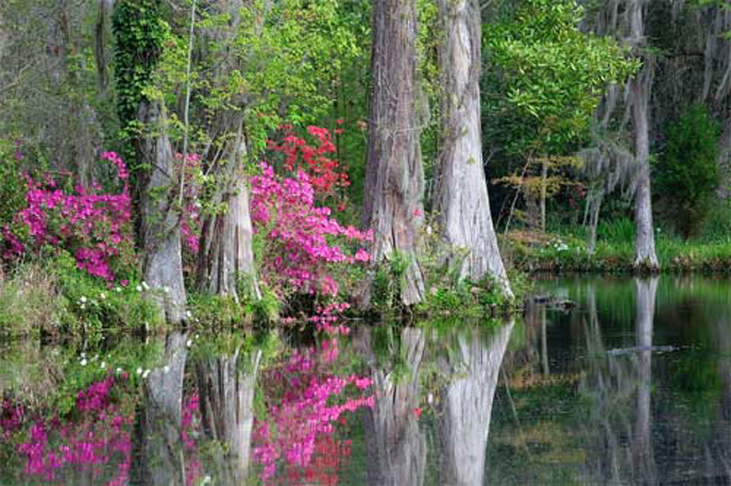 Dean Hall Plantation - Moncks Corner, Berkeley County, South Carolina SC