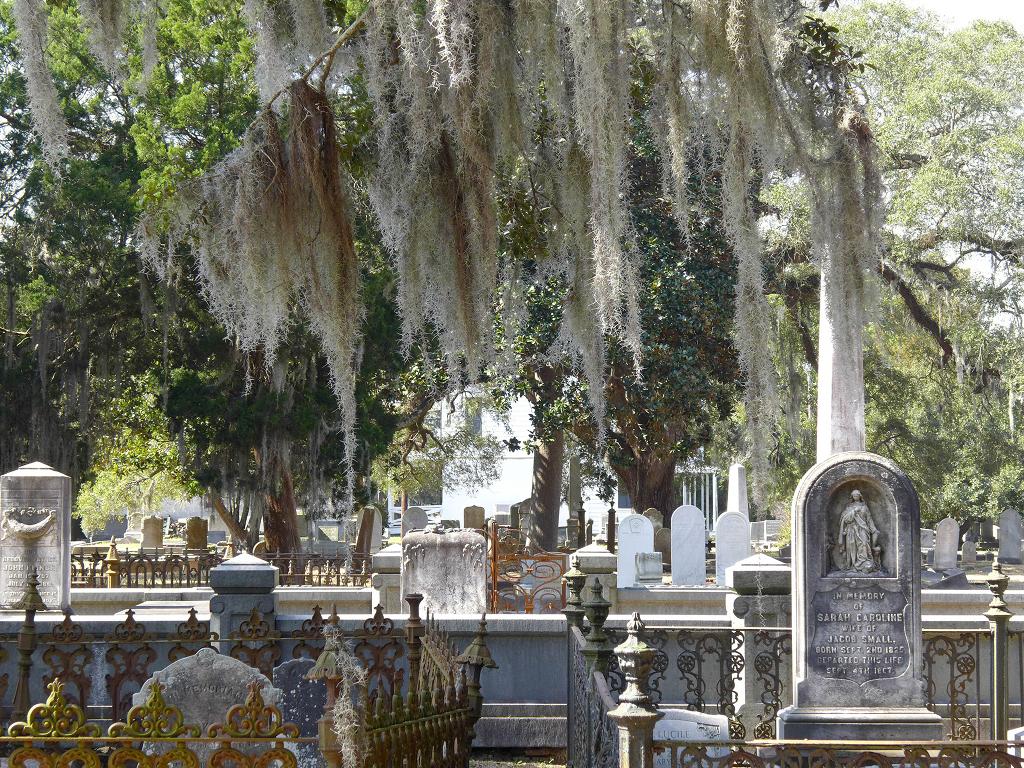 Magnolia Cemetery Charleston Tours