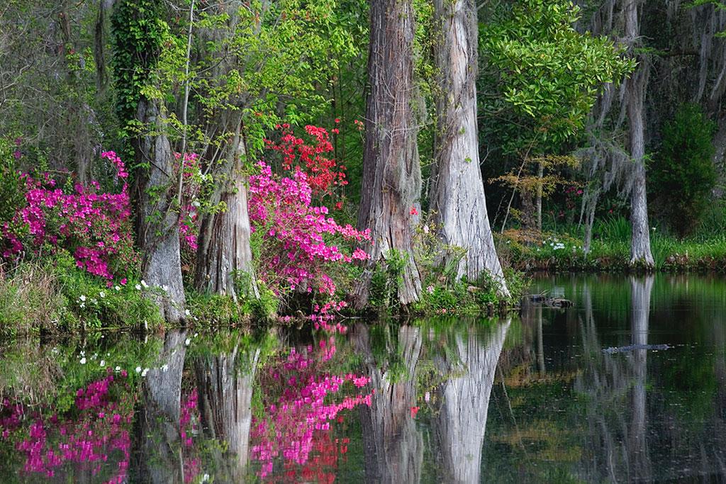 Home slave ship statistics haunted magnolia plantation charleston sc