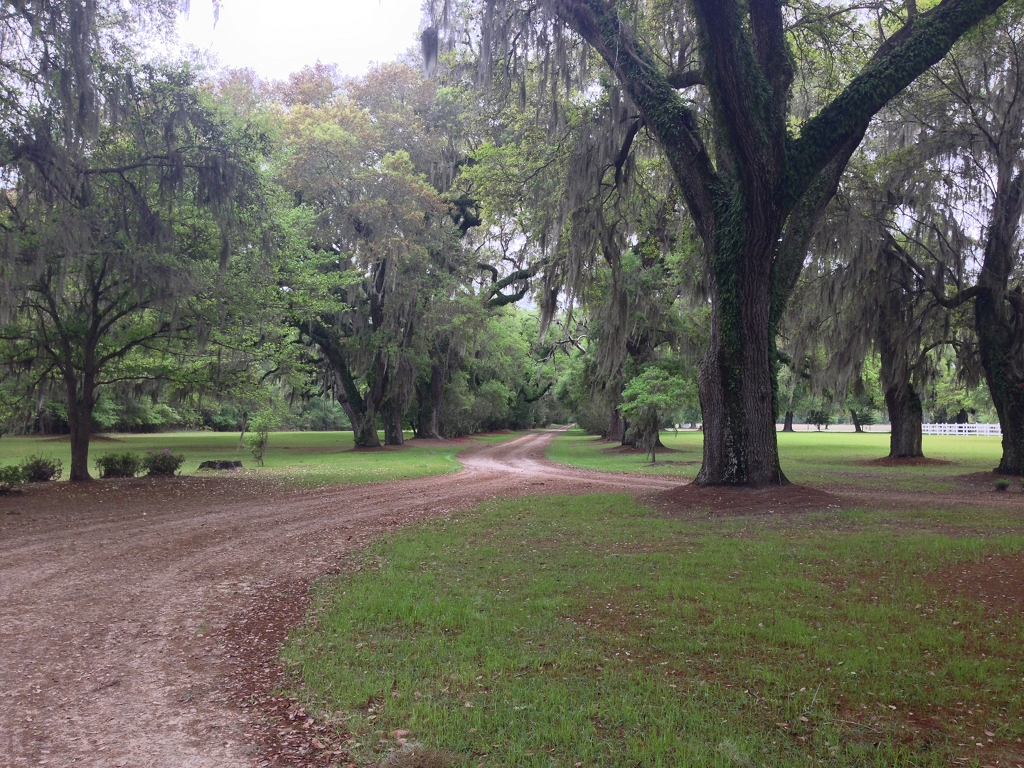 Mansfield Plantation - Georgetown, Georgetown County ...