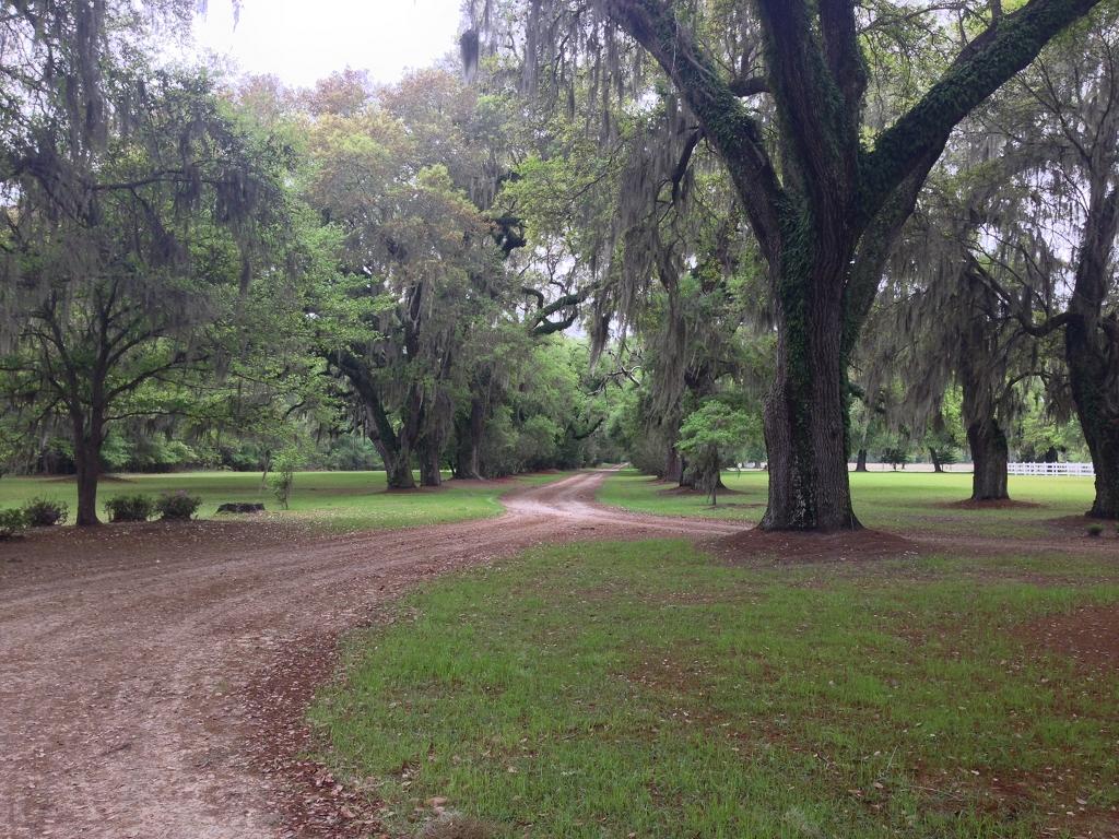 Mansfield Plantation - Georgetown, Georgetown County ...